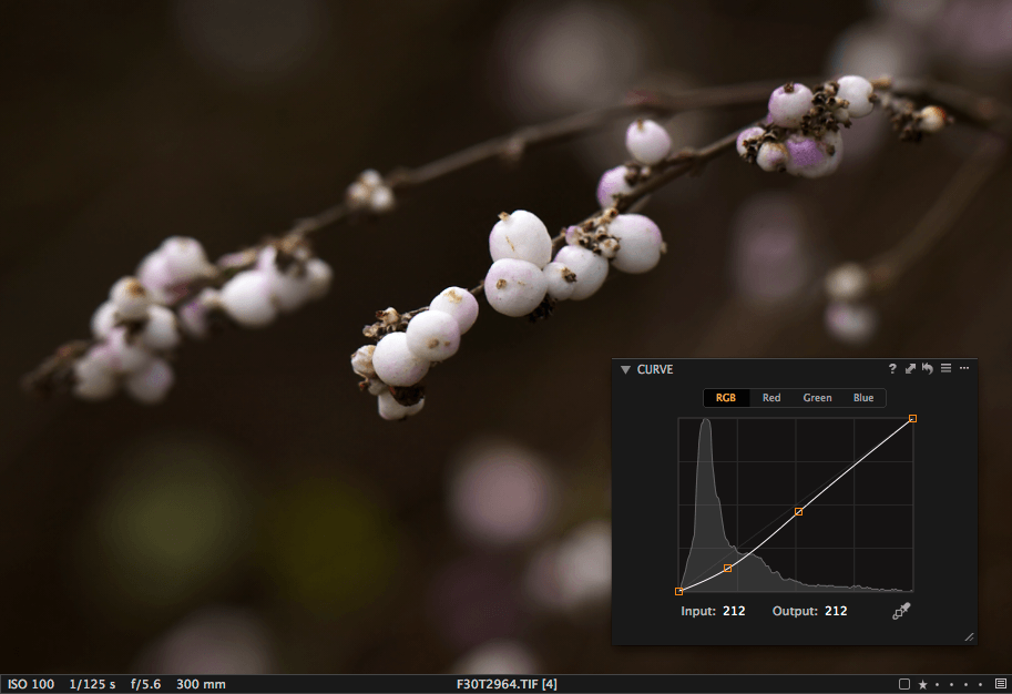 Capture One preview with Curve tool