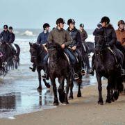 black horses on Dutch beach