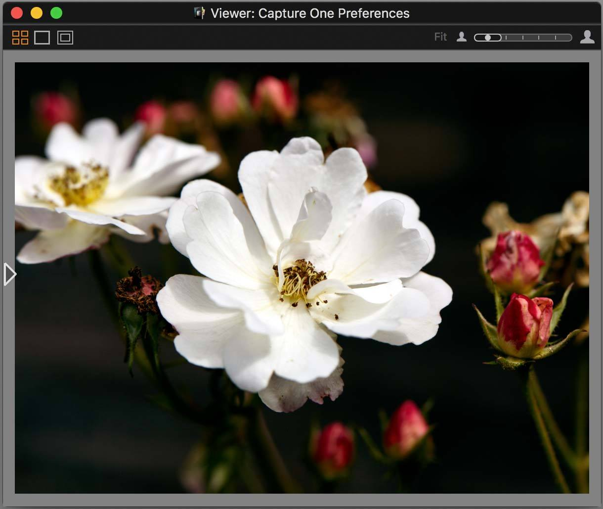 capture one pro 10, viewer, no exposure warning