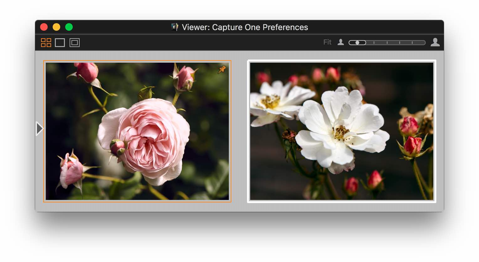 capture one 10, viewer, standard variant colors