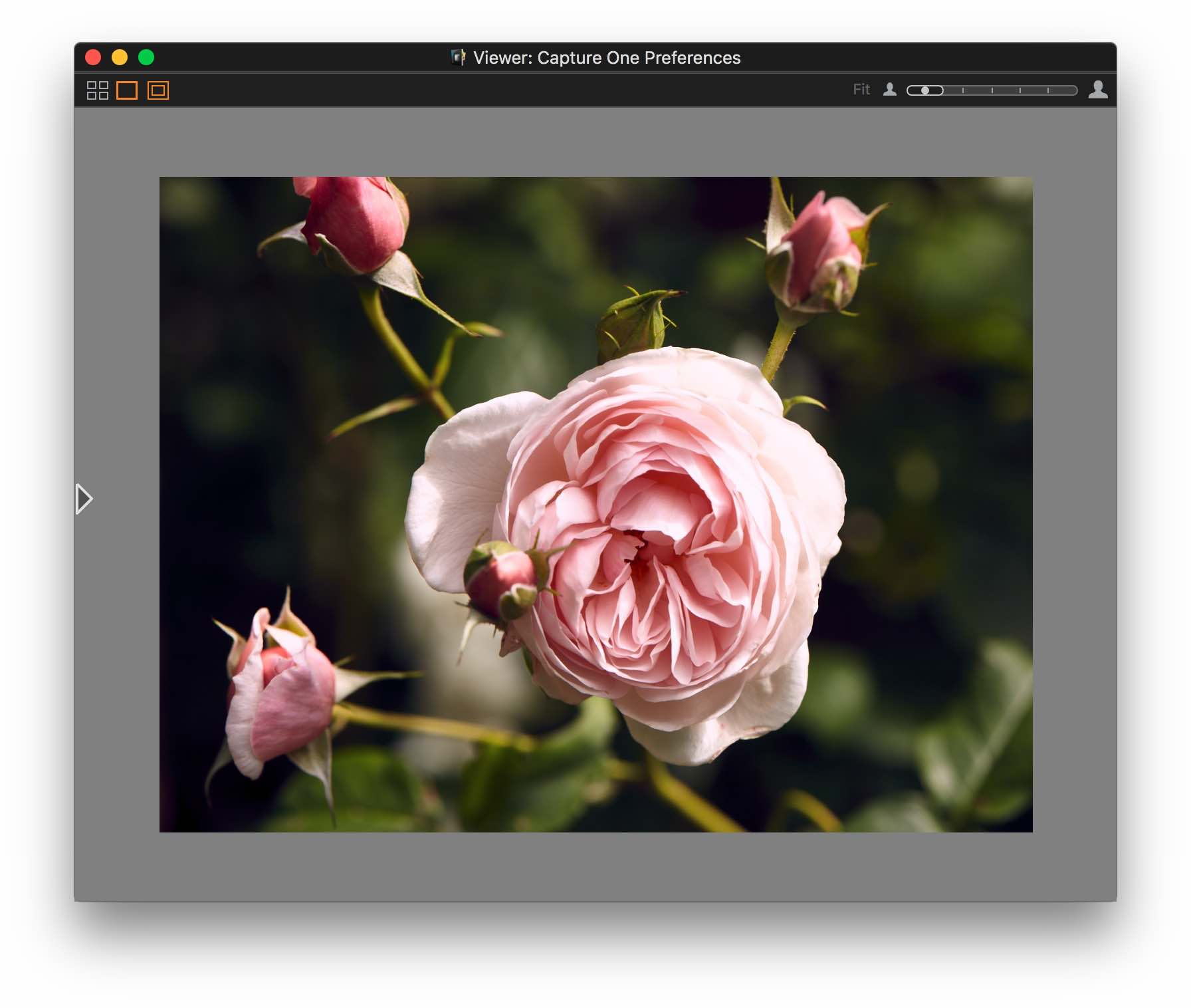 capture one 10, viewer, proof margin medium