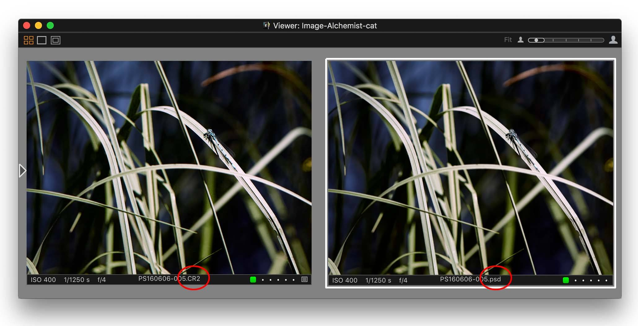 capture one pro 10.1 review, dragonfly, raw and psd