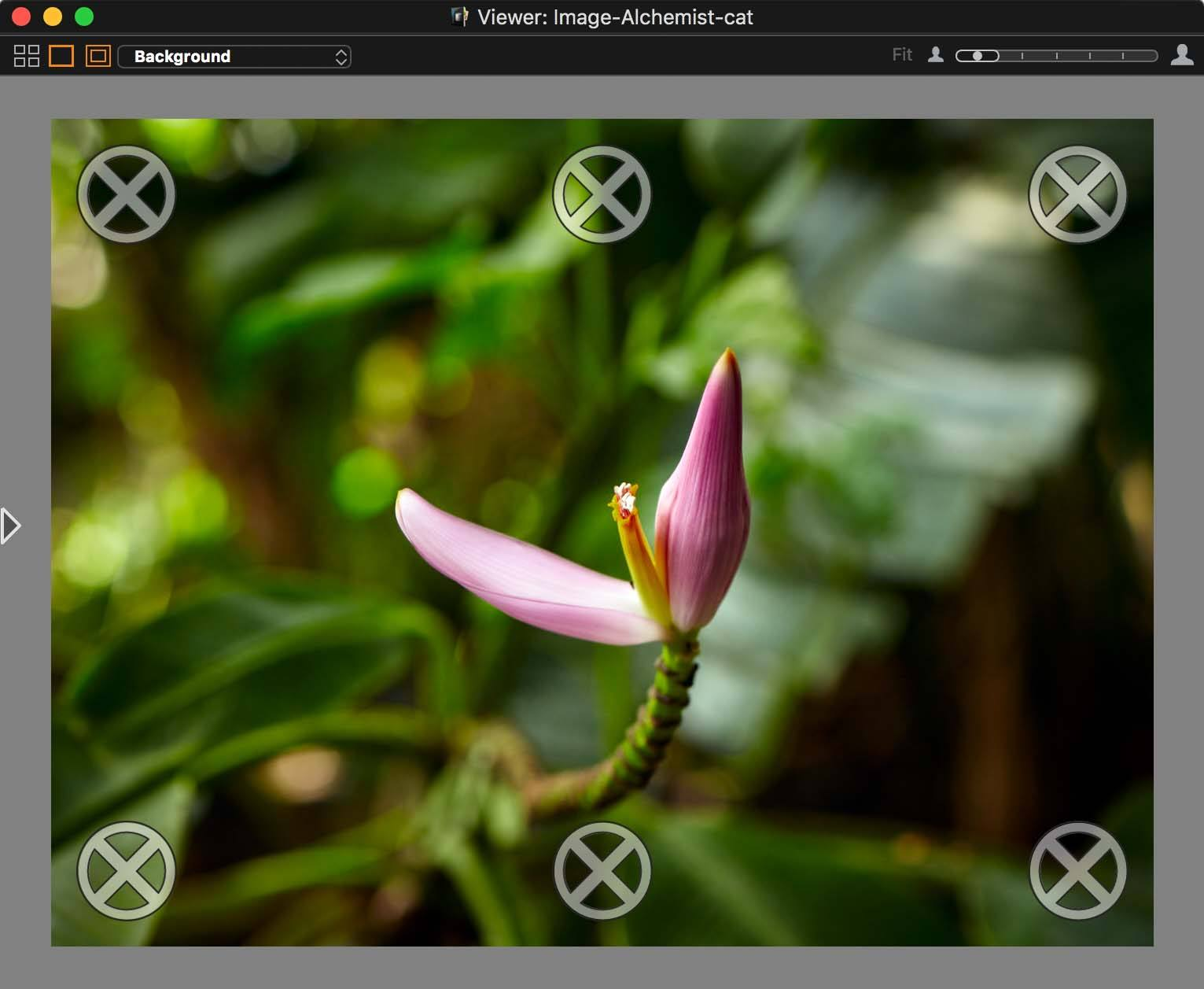 capture one tethering in-depth, viewer, composition mode