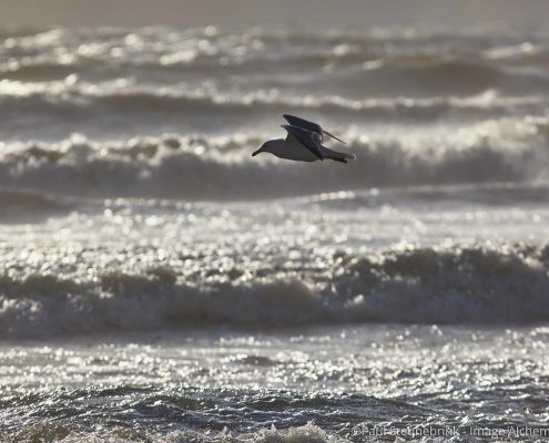 seagull near the beach, capture one, histograms