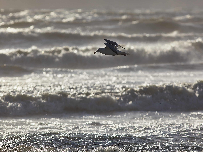 seagull near the beach, capture one, histograms