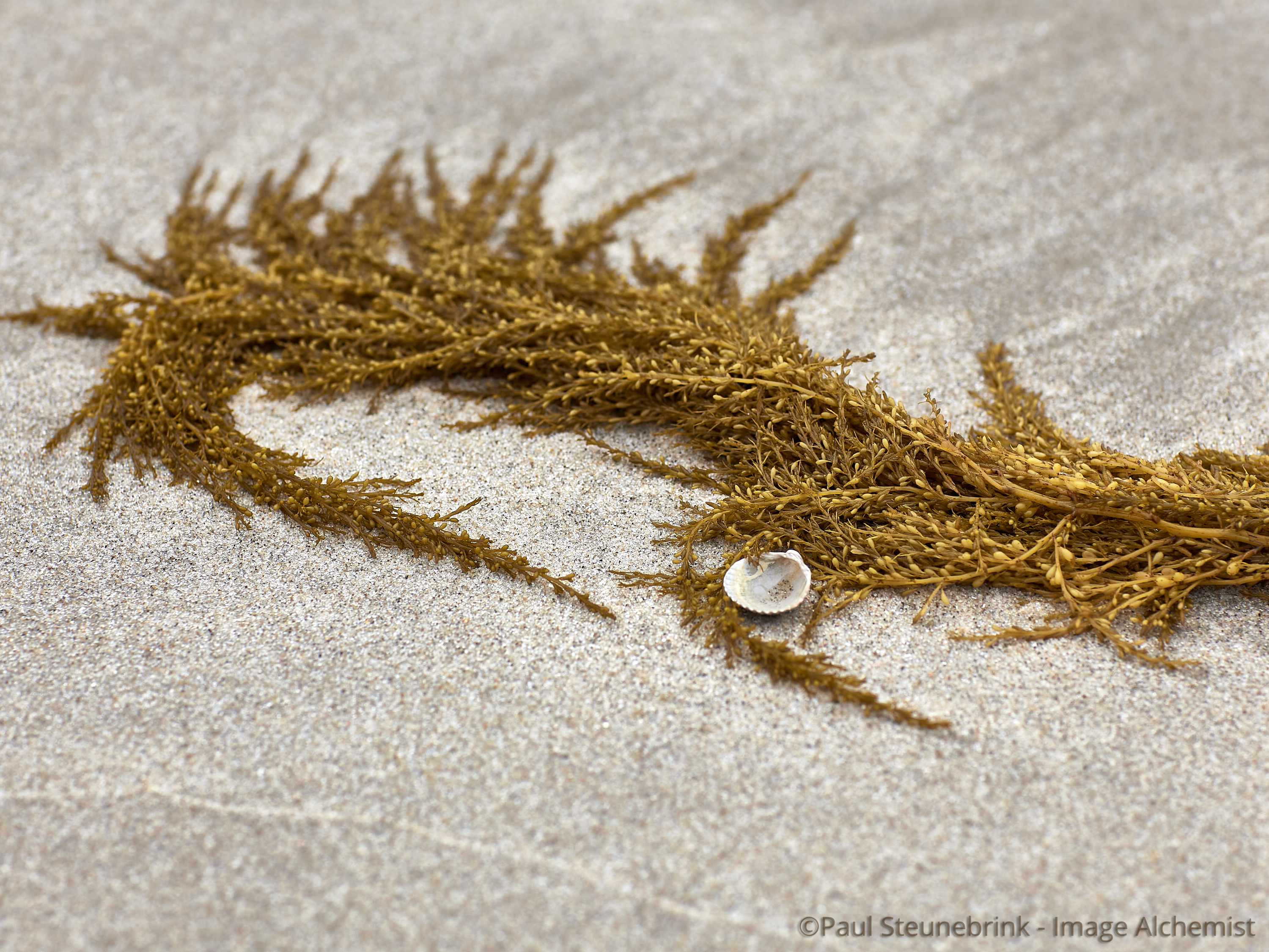 seaweed on the beach, capture one, processing pipeline