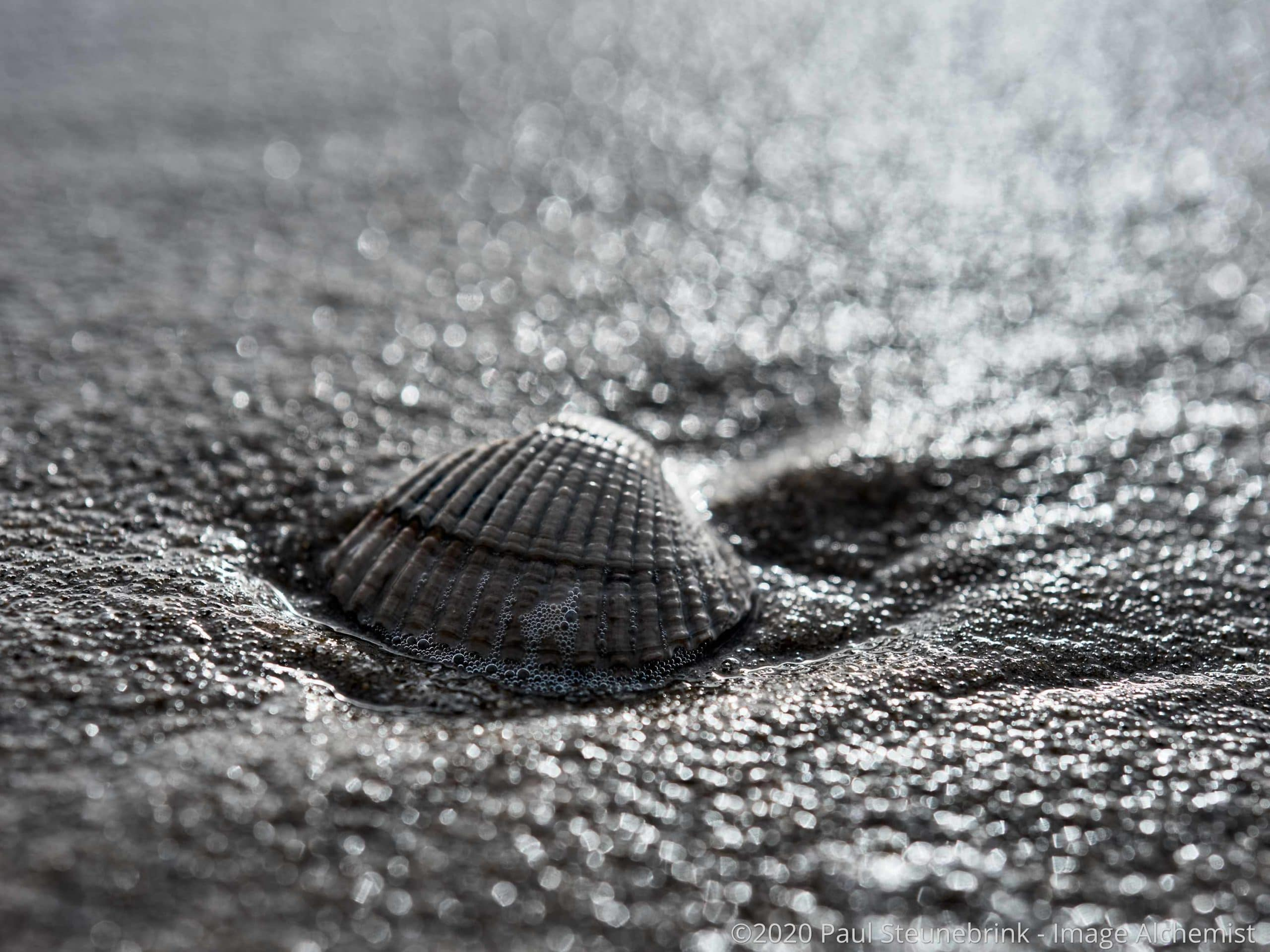 shell on the beach, with style