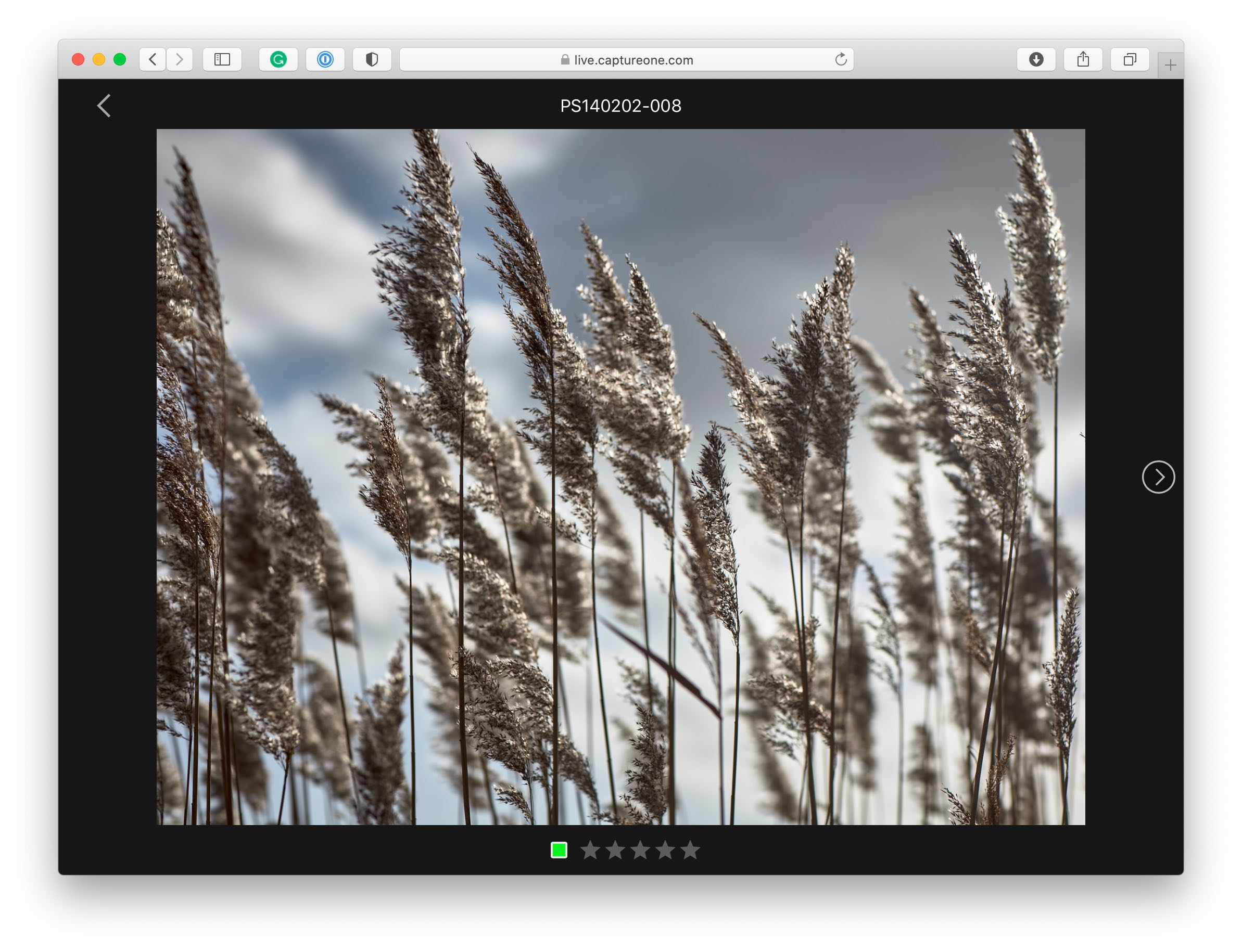 capture one live tool, browser, large view, capture one 21 update 3