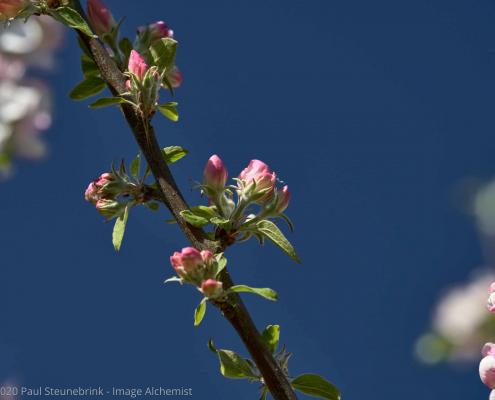 blossom against blue sky